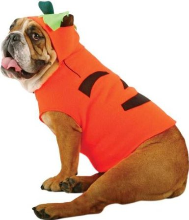 Pumpkin-Dog-Costume