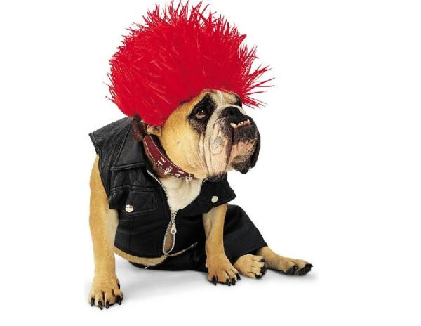 Punk-Dog-Costume
