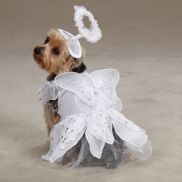 angel-dog-costume
