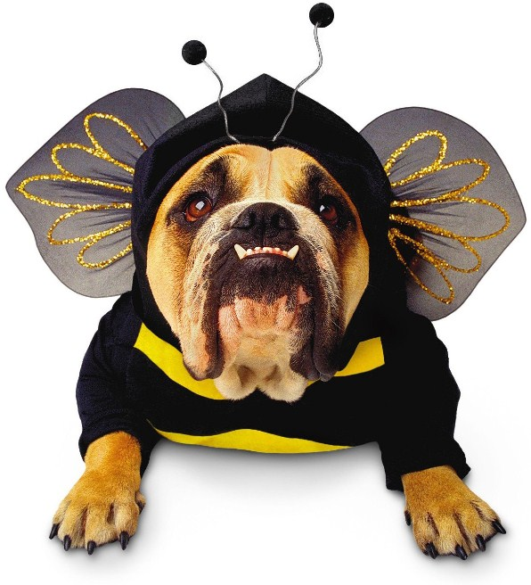 bee-dog-costume