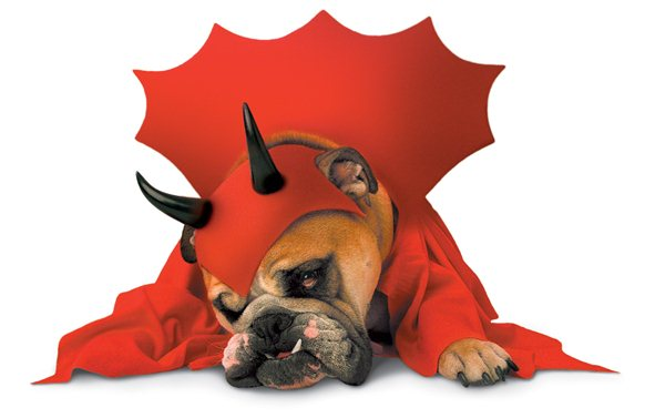 devil-dog-costume