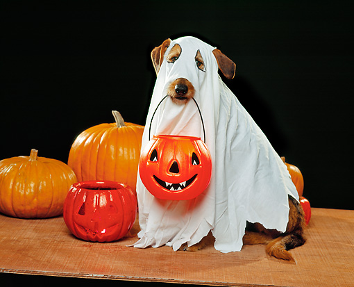 dog halloween costumes 1 - Dogs With Halloween Costumes On
