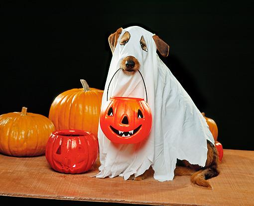 dog-halloween-costumes-1