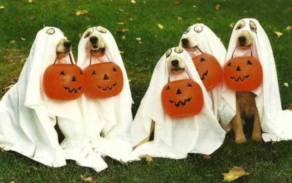 dog-halloween-costumes-2