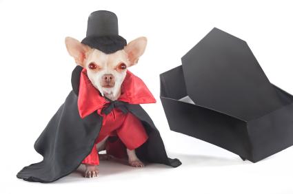 dog-halloween-costumes-4