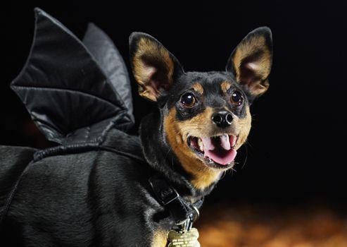 dog-halloween-costumes-5
