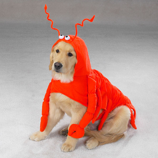 lobster-dog-costume