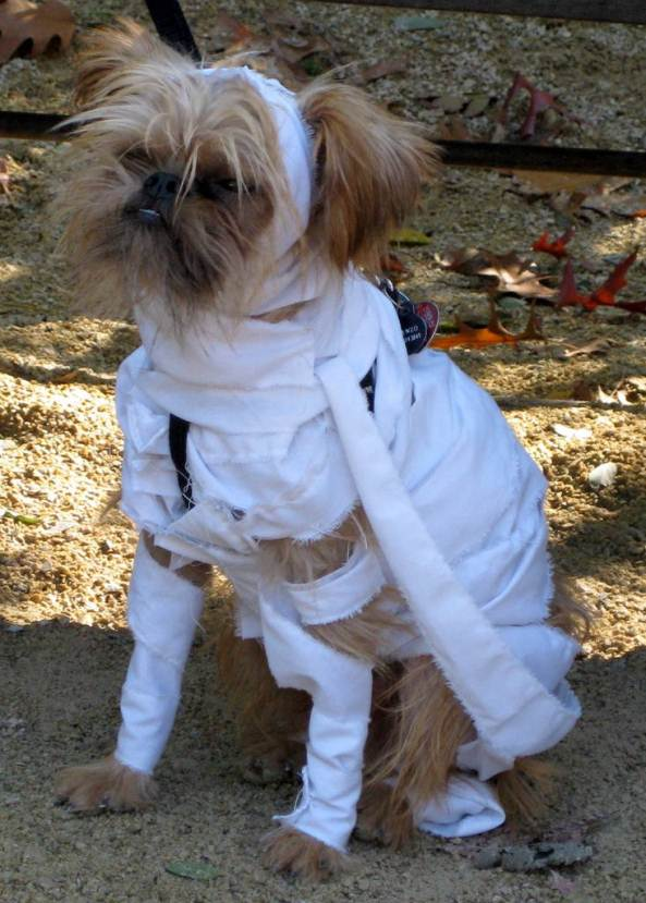mummy-dog-costume