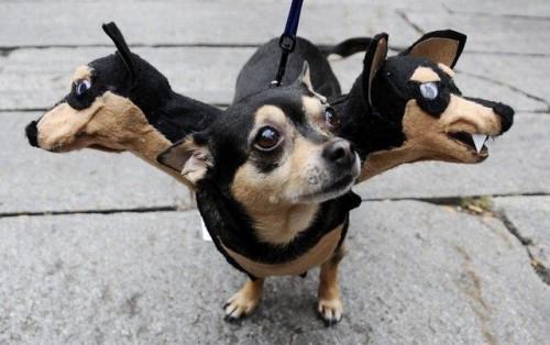 scary-dog-costume-2