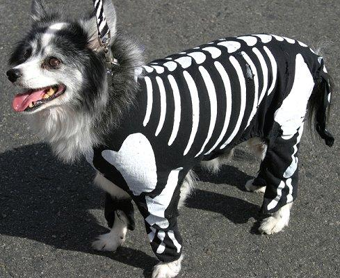 skeleton-dog-costume