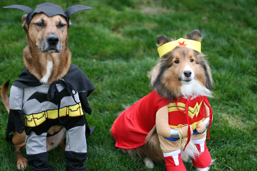 superher-dog-costume