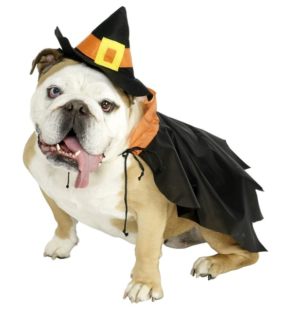 witch-dog-costume-1