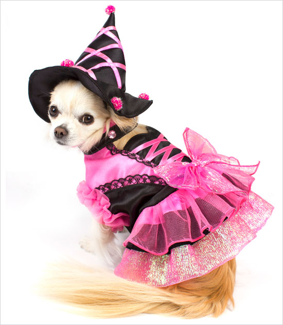 witch-dog-costume-2
