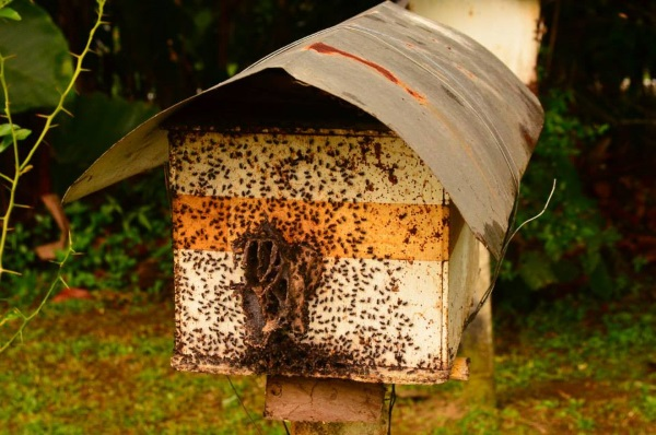 bee-farm-at-sorsogon-1