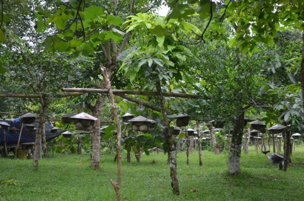 bee-farm-at-sorsogon