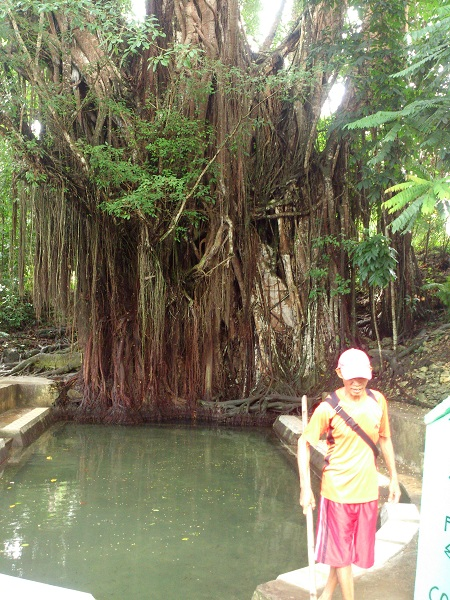Balite-tree-siquijor-and-foot-spa-1