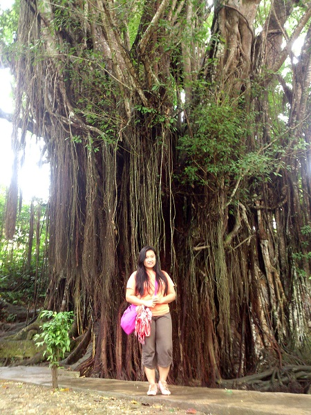 balite-tree-at-siquijor