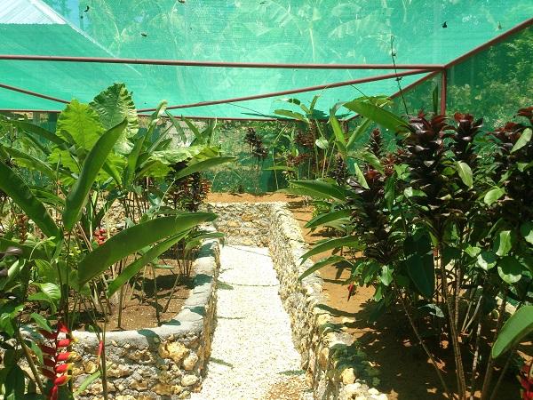 island-butterfly-garden-siquijor-2