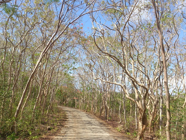 salagdoong-molave-forest-and-beach-resort-siquijor-7